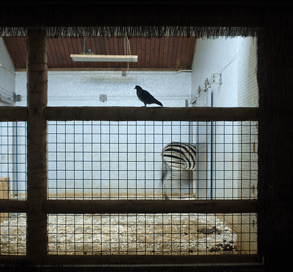 Light contrast with view on a zoo cage